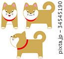 柴犬 犬 キャラクターのイラスト 34545190