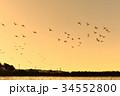 東庄 白鳥 野鳥の写真 34552800