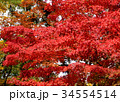 秋のイメージ:紅葉 34554514