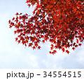 秋のイメージ:紅葉 34554515