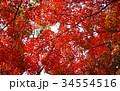 秋のイメージ:紅葉 34554516