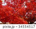 秋のイメージ:紅葉 34554517