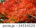 秋のイメージ:紅葉 34554520
