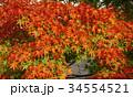 秋のイメージ:紅葉 34554521