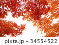 秋のイメージ:紅葉 34554522