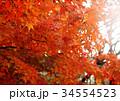 秋のイメージ:紅葉 34554523