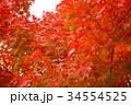 秋のイメージ:紅葉 34554525