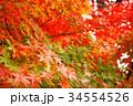 秋のイメージ:紅葉 34554526