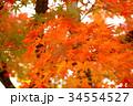 秋のイメージ:紅葉 34554527