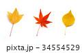 秋のイメージ:紅葉した落ち葉 34554529