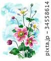 つぼみ 秋明菊 花のイラスト 34558614