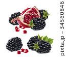 セイヨウヤブイチゴ ブラックベリー 西洋藪苺の写真 34560846