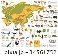 Flat Asian flora and fauna map constructor element 34561752
