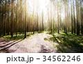 森林 林 森の写真 34562246