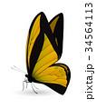 チョウ 蝴蝶 蝶のイラスト 34564113