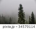 霧 樹木 樹の写真 34570114