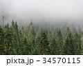 霧 樹木 樹の写真 34570115