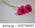 カラフルなお花 34576695