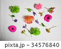 カラフルなお花 34576840