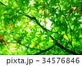 紅葉の葉っぱから 34576846