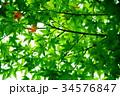 紅葉の葉っぱから 34576847