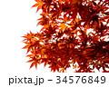 紅葉の葉っぱから 34576849