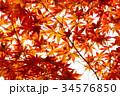 紅葉の葉っぱから 34576850