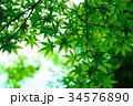 緑の紅葉と空 34576890