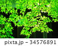 緑の紅葉と空 34576891