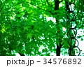 緑の紅葉と空 34576892