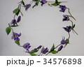お花の円 34576898