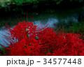 夕闇の河畔 妖しく咲き乱れる彼岸花 e-2 34577448