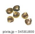 蜆 貝 貝類のイラスト 34581800