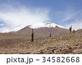 サボテン アタカマ 高地の写真 34582668