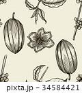 豆 ベクター アートのイラスト 34584421