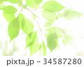 新緑 34587280