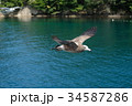鳥 飛ぶ 海の写真 34587286