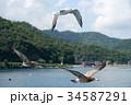 鳥 飛ぶ 海の写真 34587291