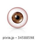 目 眼 病気のイラスト 34588598