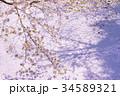 桜 春 ソメイヨシノの写真 34589321