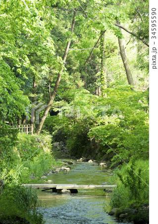 市民の憩いの場南川渓谷.郡山の発展の歴史を支えた重要な水路.自然と歴史を感じる全長1600mの散策路 34595590