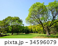 秋 公園 広場の写真 34596079