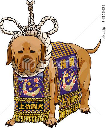 土佐犬のイラスト素材 34596421 Pixta