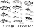 魚の筆イラスト詰め合わせ 34596427