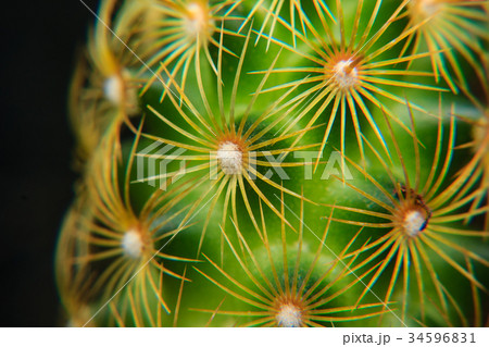 Close up of spines on a cactus 34596831