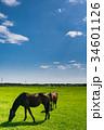 サラブレッド 放牧 青空の写真 34601126