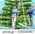 雪吊り作業 34608987
