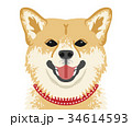 犬 顔 戌のイラスト 34614593