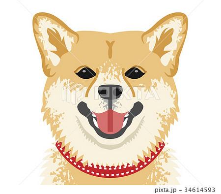 柴犬 顔アップ 正面のイラスト素材 34614593 Pixta
