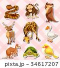組み合わせ 動物 貼り紙のイラスト 34617207